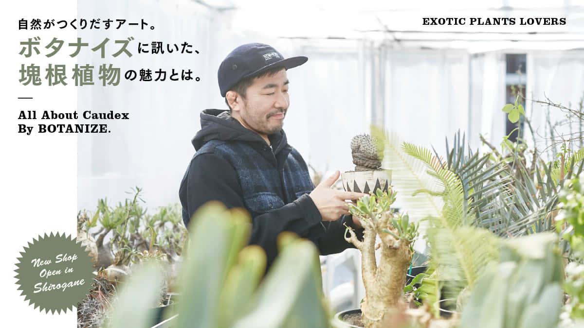自然がつくりだすアート。ボタナイズに訊いた、塊根植物の魅力とは。